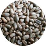 开春后绿小麦该怎样施肥
