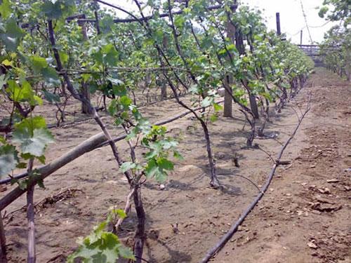 【农田滴灌管】选择农田滴灌管时需要考虑哪些因素及原则