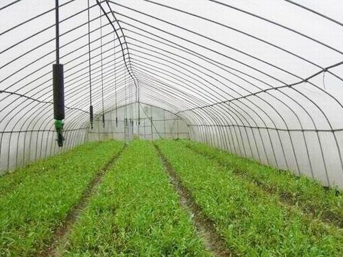 西红柿大棚滴灌安装方式